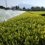 パネル下の農作物に係る状況【経過報告3】