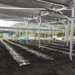 お茶の営農型太陽光設備が完成