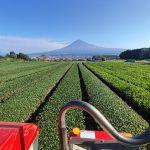 秋冬番と富士山